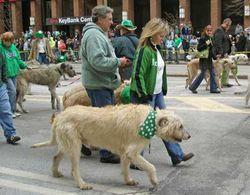 Irish-wolfhounds